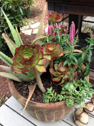 Mix and match succulent creation