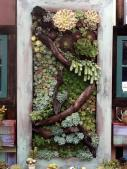 Vertical Succulent Display