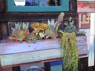 Succulents in Pallet Box