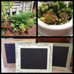 Everything Succulent Gardens