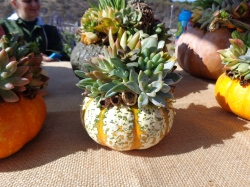Mini-pumpkin with acorns