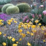 Southwest-Garden-150×150