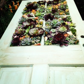 Succulent Door for Entry