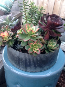 Succulent Centerpiece in Tin