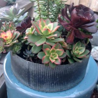 Centerpiece for wedding with garden succulents.