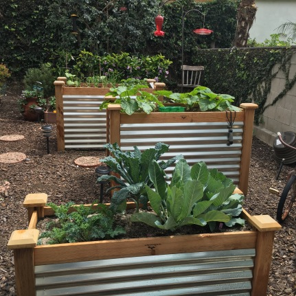 New Garden Boxes from kits on Amazon - we added metal siding
