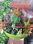 Succulent Bowl and COLOR!