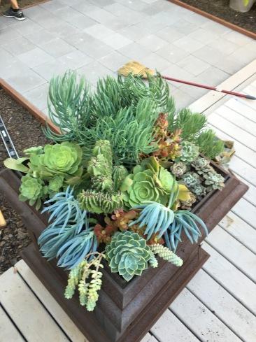 Cost of succulents $0